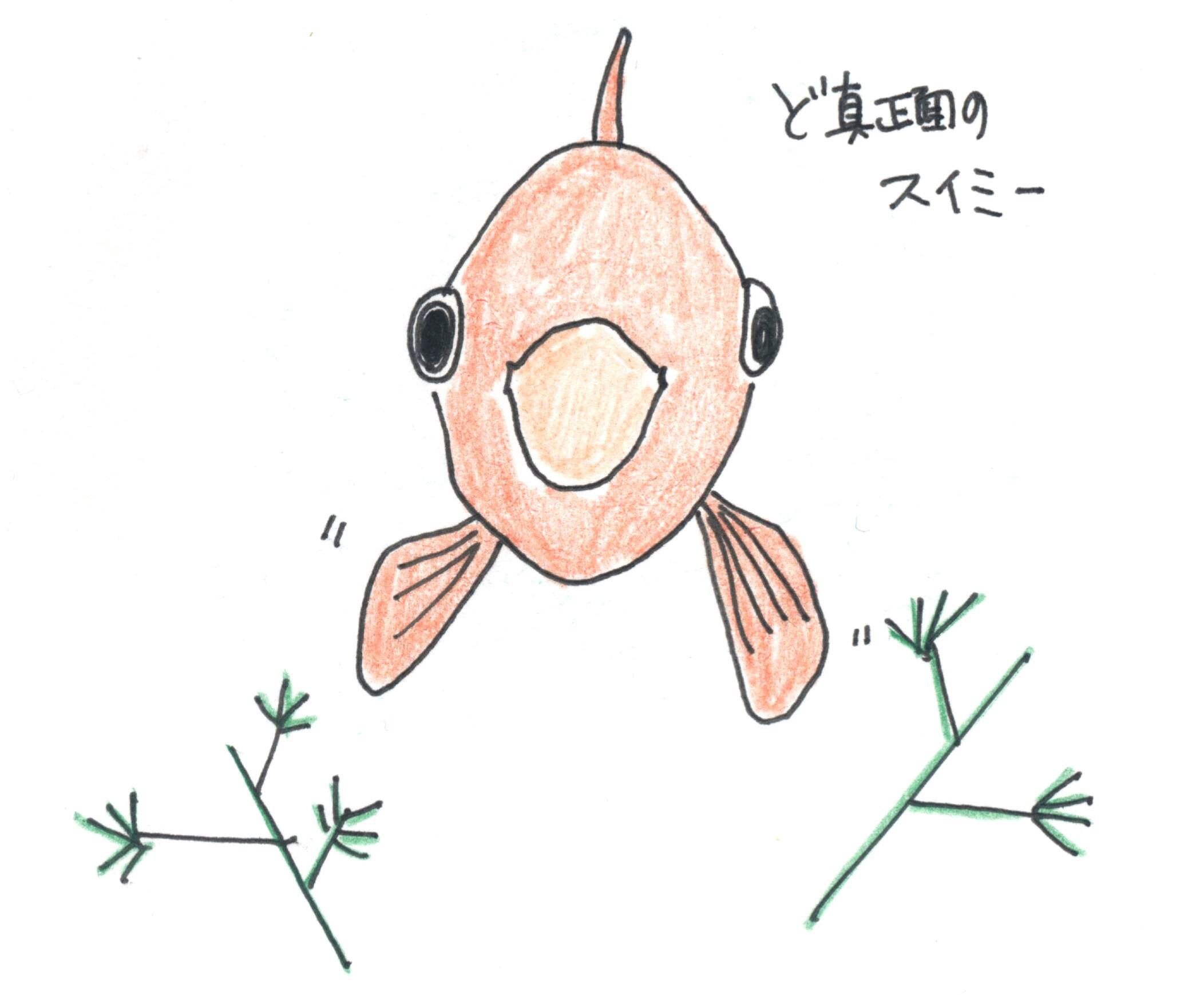 水槽から飛び出し注意!負傷した金魚ちゃんの治療方法と飛び出し防止策